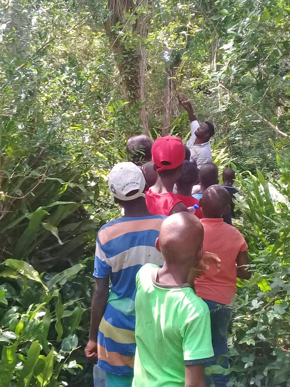 Kosi Forest Lodge Projects